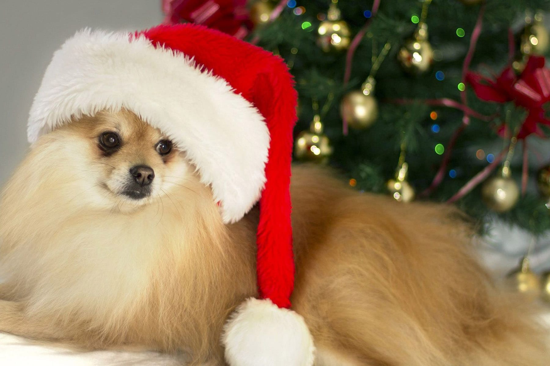 Santa Paws Prize Pack Giveaway The Mama Report